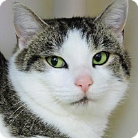 Adopt A Pet :: Myra - Nashville, IN