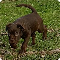 Adopt A Pet :: HEATHER - Cranston, RI