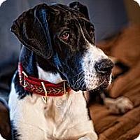 Adopt A Pet :: Misha - Virginia Beach, VA