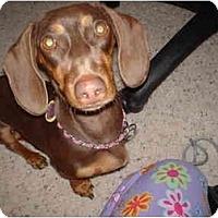 Adopt A Pet :: JOSIE & MOLLIE - Portland, OR