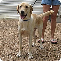 Adopt A Pet :: Bobby - Spring, TX