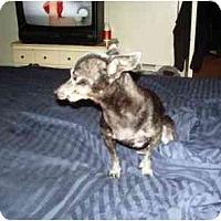 Adopt A Pet :: Tina - Scottsdale, AZ