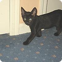Adopt A Pet :: LICORICE - Hamilton, NJ