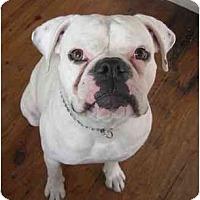 Adopt A Pet :: Buster - Albany, GA