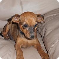 Adopt A Pet :: Ace - Meridian, ID