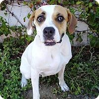 Adopt A Pet :: CAYA - El Cajon, CA