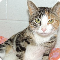 Adopt A Pet :: Anastasia - Briarcliff Manor, NY