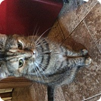 Adopt A Pet :: Dolly& Tori - Clay, NY