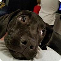 Adopt A Pet :: Tootsie - Estherville, IA