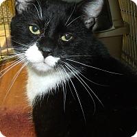 Adopt A Pet :: SCOOTER - Acme, PA