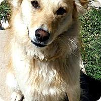 Adopt A Pet :: Blaze-ADOPTION PENDING - Boulder, CO