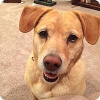 Adopt A Pet :: Ellie - Nashville, TN