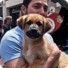 Adopt A Pet :: Ethan Pup