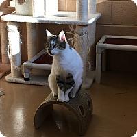 Adopt A Pet :: Aurora - Goshen, NY