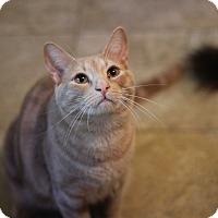 Adopt A Pet :: Scooter - Richmond, VA