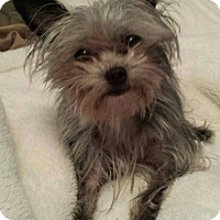 Adopt A Pet :: Gilda - Salem, OR