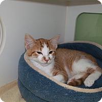 Adopt A Pet :: roger - Muskegon, MI