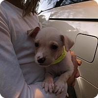 Adopt A Pet :: Tawny - Summerville, SC
