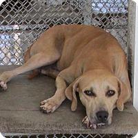 Adopt A Pet :: MJ - Sarasota, FL