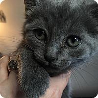 Adopt A Pet :: Ariel - Staten Island, NY
