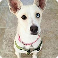 Adopt A Pet :: Monica - Los Angeles, CA