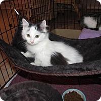 Adopt A Pet :: Bacardi - Cincinnati, OH