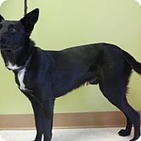 Adopt A Pet :: Sawyer - Columbus, NE