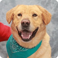 Adopt A Pet :: Brody - Garfield Heights, OH