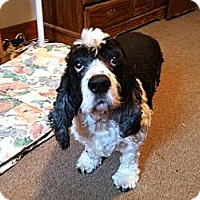 Adopt A Pet :: Elroy 10yr Adopted - Mentor, OH