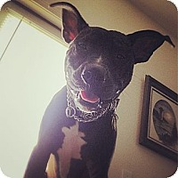 Adopt A Pet :: Vader - Indianapolis, IN