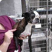 Adopt A Pet :: Penelope Peeps - Temecula, CA
