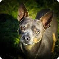 Adopt A Pet :: Freddy - Justin, TX