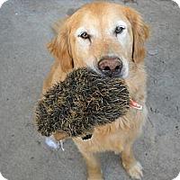 Adopt A Pet :: Otis - Denver, CO