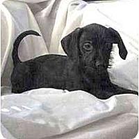 Adopt A Pet :: Demi - Mooy, AL