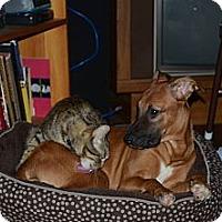 Adopt A Pet :: Minie - Chicago, IL