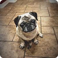 Adopt A Pet :: Halle - Austin, TX