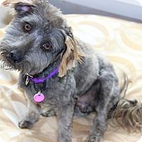 Adopt A Pet :: Cole - Burbank, CA