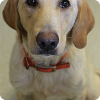 Adopt A Pet :: Lydia Adoption Pending - East Hartford, CT
