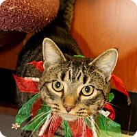 Adopt A Pet :: Sam - Tiffin, OH