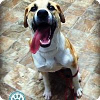 Adopt A Pet :: Roxie - Kimberton, PA