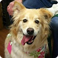 Adopt A Pet :: Seven - BIRMINGHAM, AL