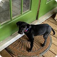 Adopt A Pet :: Corey - Groton, MA
