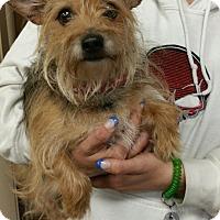 Adopt A Pet :: Gideon - Ogden, UT
