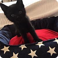 Adopt A Pet :: Rodney - Philadelphia, PA
