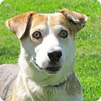 Adopt A Pet :: Fonzo - Woodstock, IL