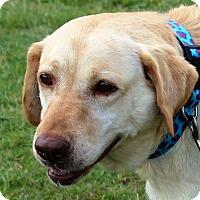 Adopt A Pet :: Jesse - Huntsville, AL