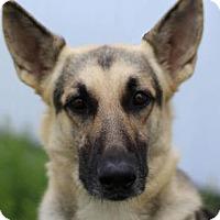 Adopt A Pet :: Shiloh - Colorado Springs, CO