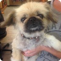 Adopt A Pet :: Koi - Scottsdale, AZ