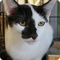 Adopt A Pet :: Dillon - Houston, TX