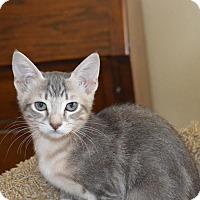 Adopt A Pet :: Jenna - Flower Mound, TX